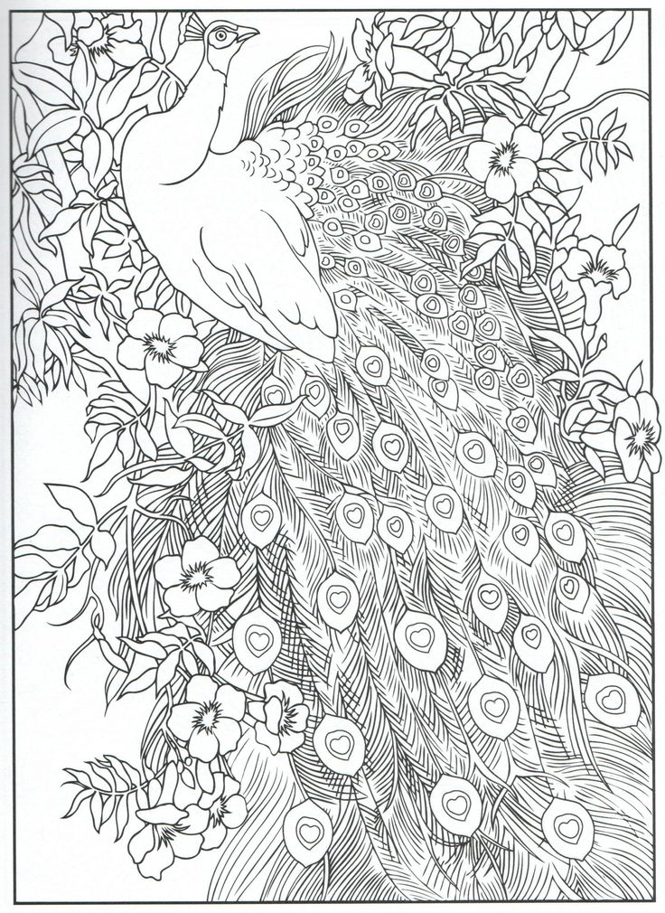 As The Quote Says Description Peacock Feather Coloring Pages Colouring Adult Detailed Advanced Printable