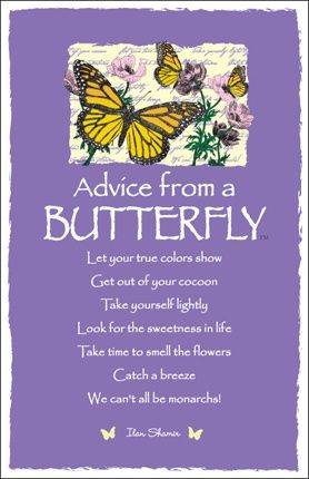 Success Quotes Advice From A Butterfly By Ilan Shamir