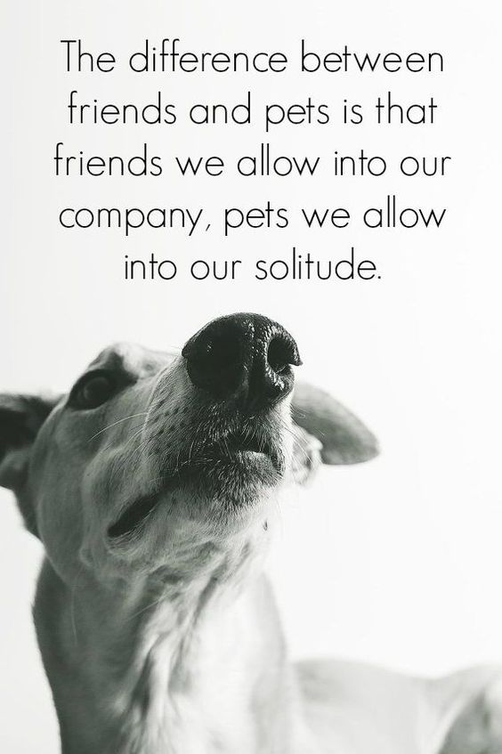 Inspirational And Motivational Quotes 23 Amazing Quotes For Dog