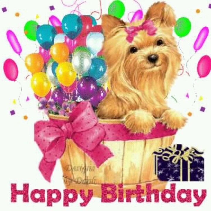 Quotes About Birthday Birthday Yorkie Quotes Of The Day Your
