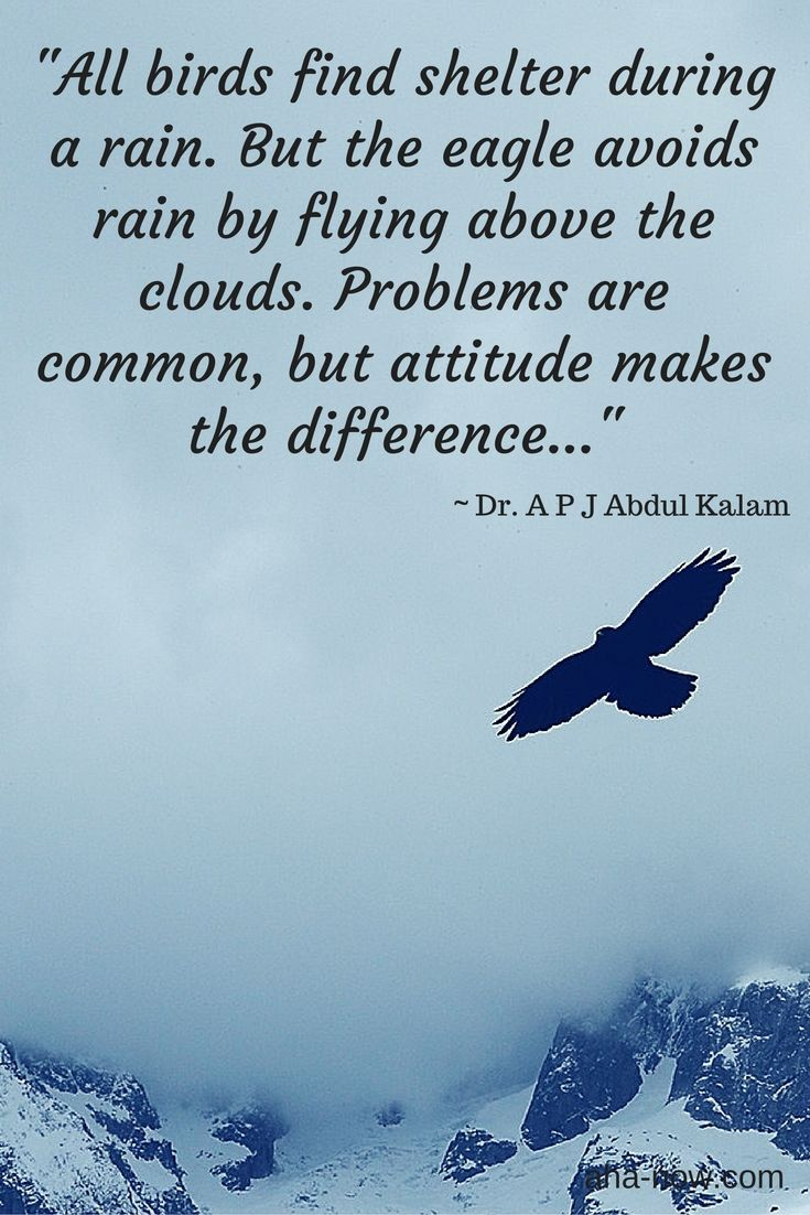 Positive Quotes All Birds Find Shelter During A Rain But The